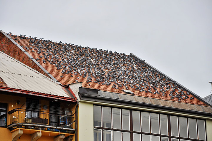 A2B Pest Control are able to install spikes to deter birds from roofs in City Of London.