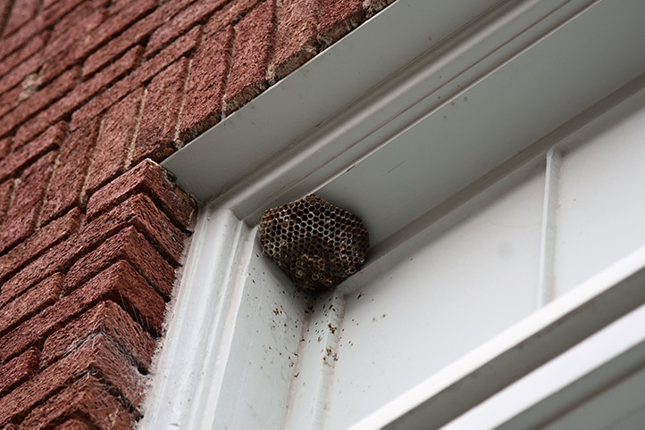 We provide a wasp nest removal service for domestic and commercial properties in City Of London.